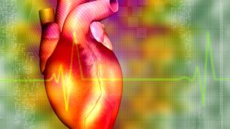 La concentration des lipides chez les jeunes adultes prédit bien le risque de maladie coronarienne à 20 ans