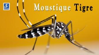 Alerte au moustique tigre