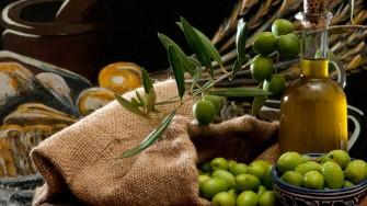 L'Olivier, l'huile, l'olive