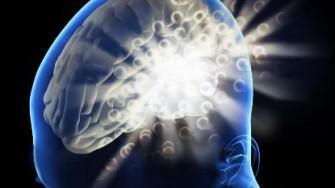 Découverte de 40 gènes impliqués dans l'intelligence
