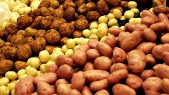 2008, année de la  pomme de terre