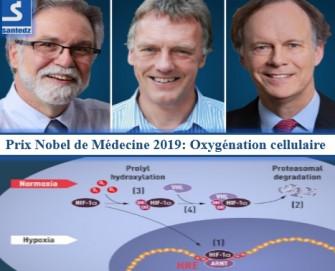 Le Nobel de médecine 2019 récompense des travaux sur l'oxygénation des cellules