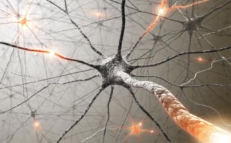 Épilepsie : Identification d'une signature neuroanatomique commune