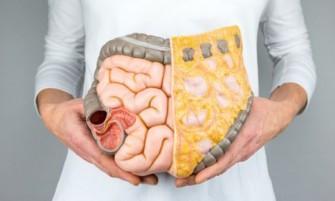 Sensibilisation : cancer du colon et du rectum, une nutrition saine pour combattre la maladie
