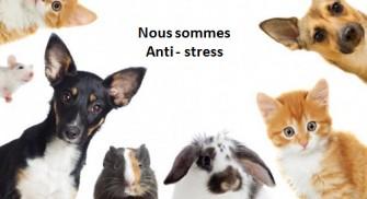 Animaux de compagnie : meilleur allié anti-stress